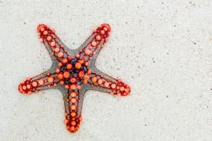 starfish-74535_640
